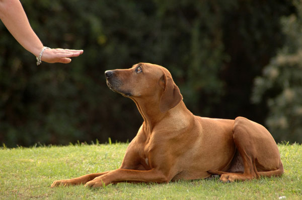 cvičenie psa